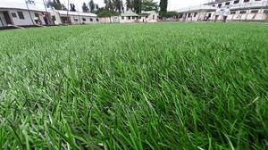 Artificial Grass / Turf | Garden for sale in Dar es Salaam, Ilala