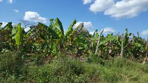 Shamba Linauzwa La Umwagiliaji   Land & Plots For Sale for sale in Bagamoyo, Msata