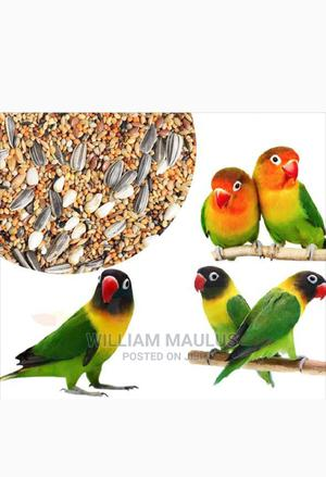 TWO LOVE BIRDS(Male Female) With Cage | Birds for sale in Dar es Salaam, Temeke