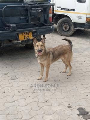 6-12 Month Female Mixed Breed German Shepherd | Dogs & Puppies for sale in Dar es Salaam, Kinondoni