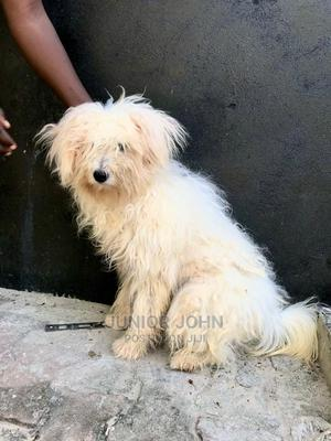 3-6 Month Female Mixed Breed Dog | Dogs & Puppies for sale in Dar es Salaam, Ilala