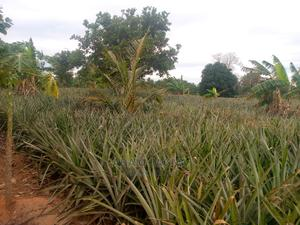 Shamba Linauzwa   Land & Plots For Sale for sale in Bagamoyo, Kiwangwa