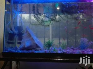 Aquariums And Pet Fish | Pet's Accessories for sale in Arusha Region, Arusha