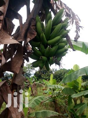 Plot For Sale | Land & Plots For Sale for sale in Pwani Region, Kibaha