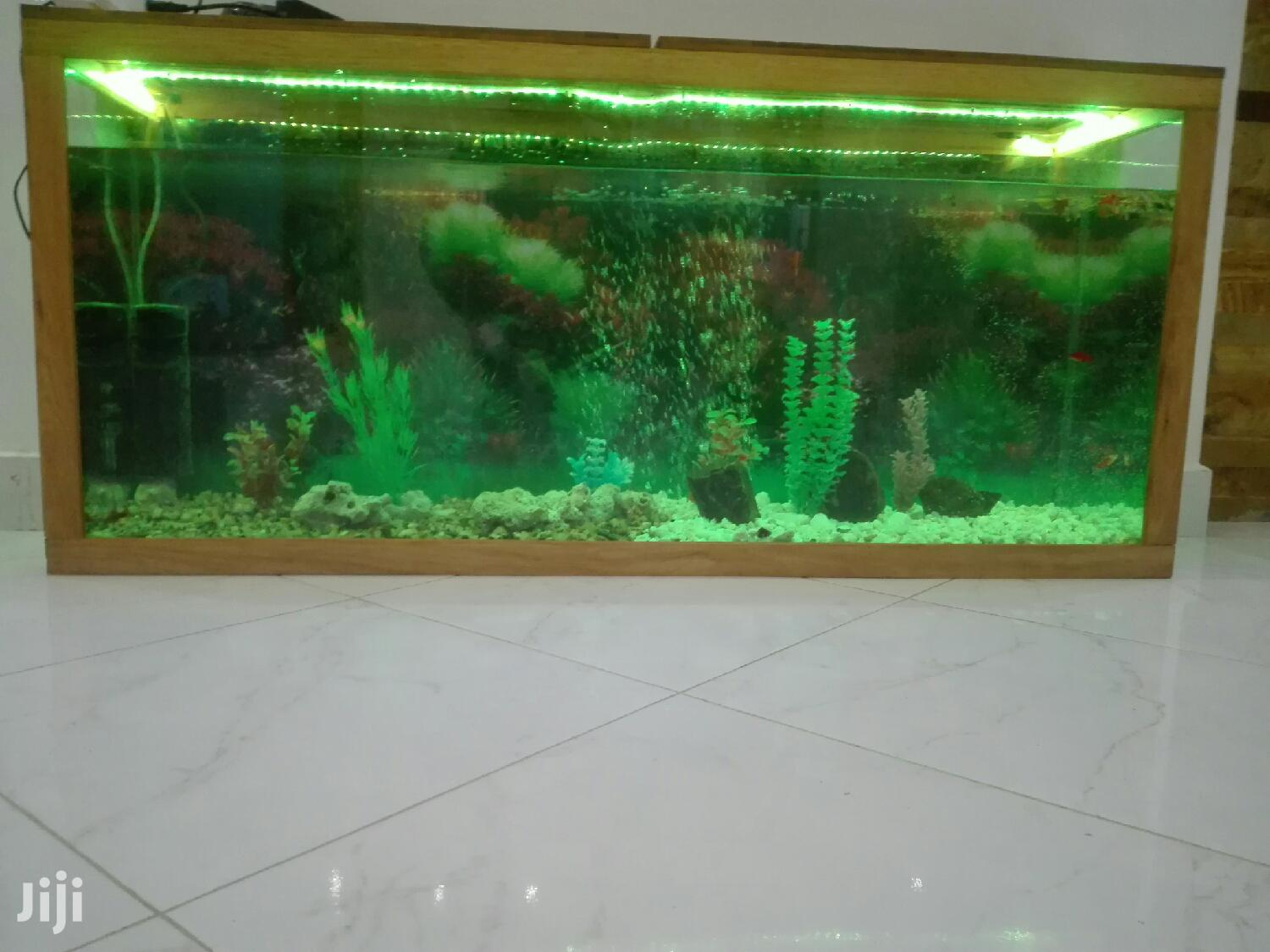 Archive: Aquariums And Pet Fish Available
