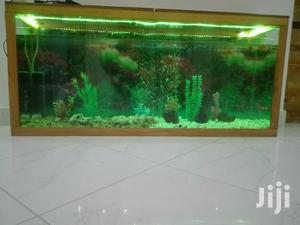 Aquariums And Pet Fish Available | Fish for sale in Arusha Region, Arusha