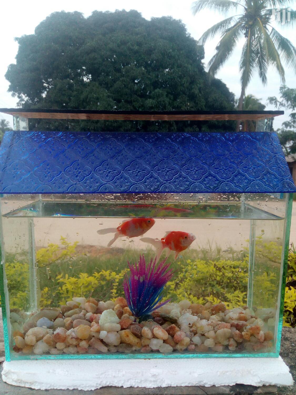 Aquariums And Pet Fish   Fish for sale in Kinondoni, Dar es Salaam, Tanzania