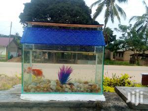 Aquariums And Pet Fish | Fish for sale in Arusha Region, Arusha