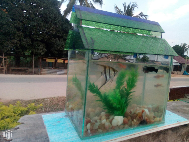 Pet Fish And Aquariums