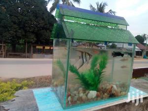 Pet Fish And Aquariums | Fish for sale in Arusha Region, Arusha