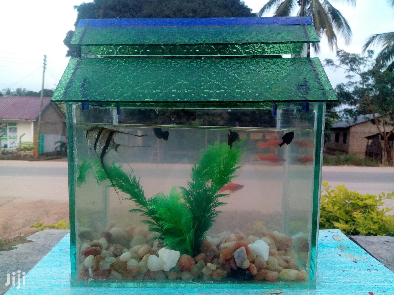 Pet Fish And Aquariums   Fish for sale in Arusha, Arusha Region, Tanzania