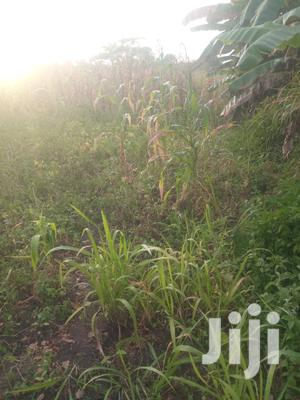 Shamba Linauzwa Pwani   Land & Plots For Sale for sale in Pwani Region, Bagamoyo