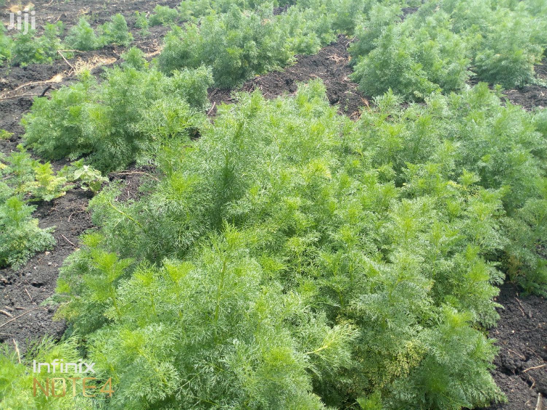 Arusha Fertile Lands For Lease   Land & Plots for Rent for sale in Monduli, Arusha Region, Tanzania