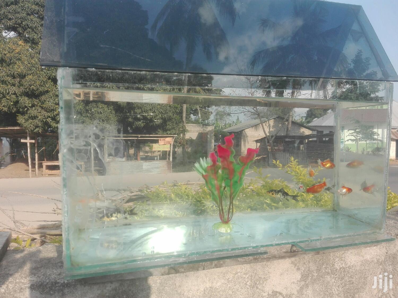 Home Decoration | Fish for sale in Arusha, Arusha Region, Tanzania