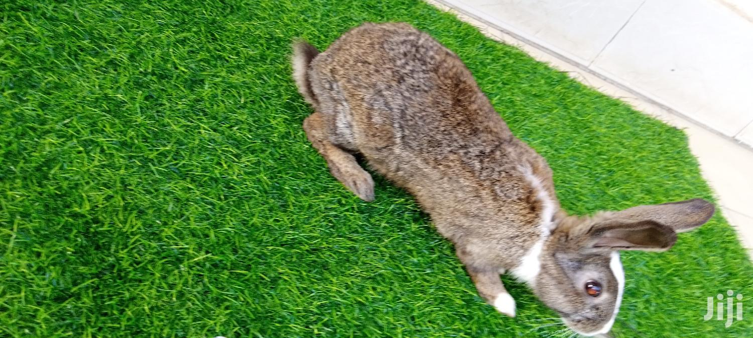 Archive: Rabbit For Food