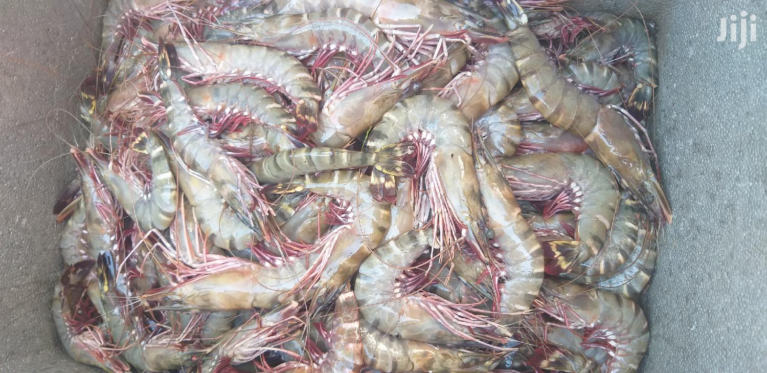 Archive: We Sell Fresh Prawns For Affordable Retail And Wholesale