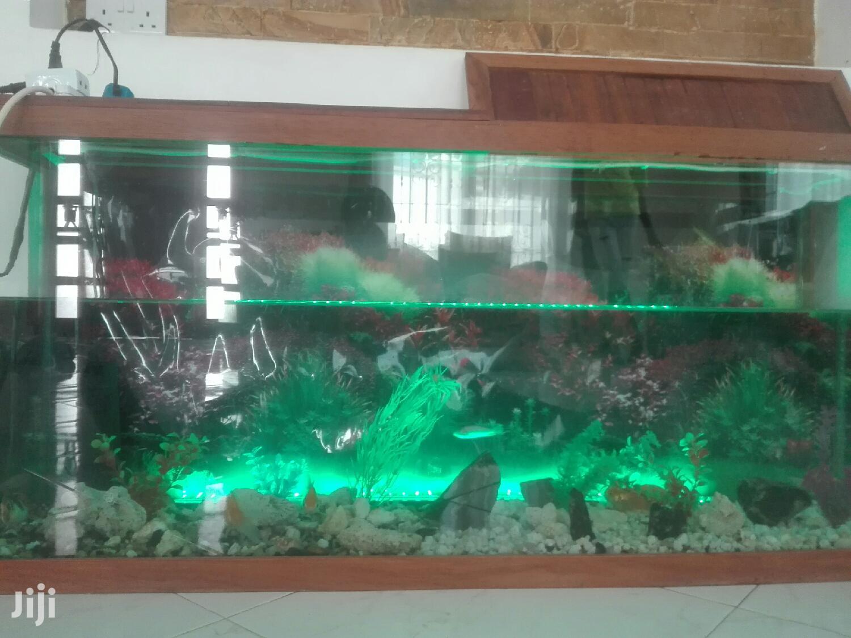 Aquarium Equipment And Pet Fish