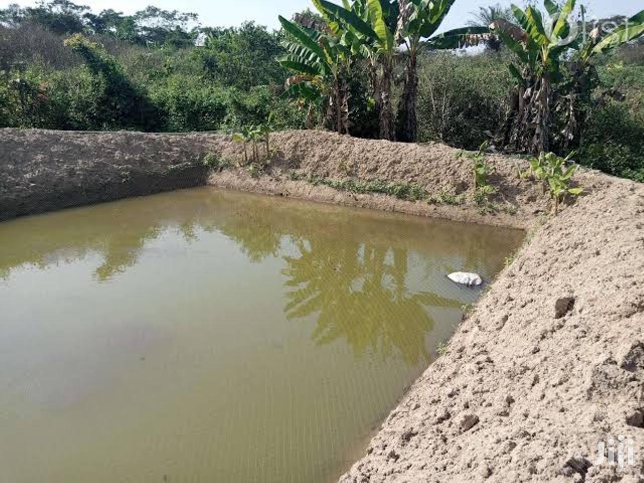 Eneo LA Ziwani/ Beach Plot Farm | Land & Plots For Sale for sale in Nyanguge, Magu, Tanzania