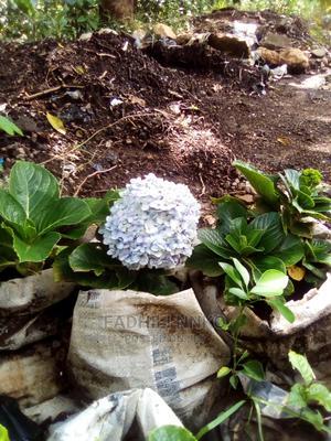 Hide Ranger Flowers | Garden for sale in Arusha Region, Arusha